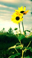 Sunflowers by RicheliVargas