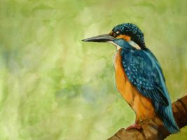 Kingfisher by LadyTinuz