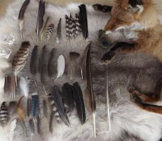 Feather Collection by TabbyFoxTaxidermy