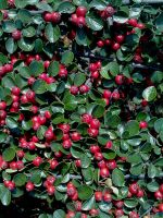 Autumn moments. A carpet of berries. by Demonogorgon