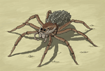 Wolf Spider, carrying young by Hybris2