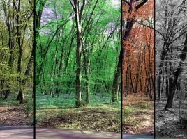 4 Seasons by remousse