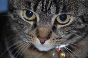 My Cat - Close Up by krazy3