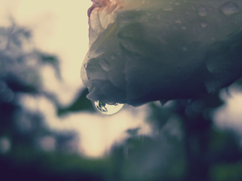 Droplet by Pamba