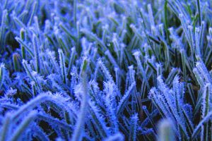 First Frost by dsiegel