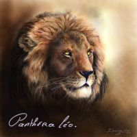 lion by imcy