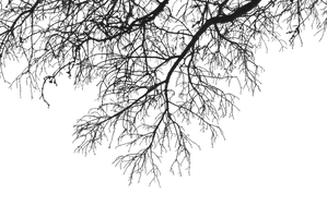Hanging Branches 02 PNG.. by Alz-Stock-and-Art