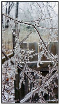 Ice Storm by Sar10628