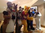 Confuzzled 2015 Photo 2 by Electuroo