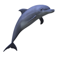 Dolphin PNG by LG-Design
