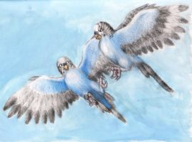 Caboose and Church as Parakeets by Pickledsuicune
