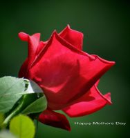 Happy Mothers Day 5-9-10 by Tailgun2009