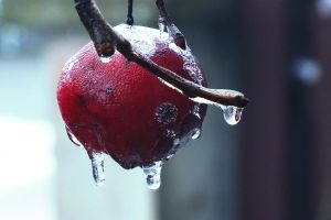 Frozen Apple by Karybalism