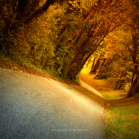 Autumn Road by DREAMCA7CHER