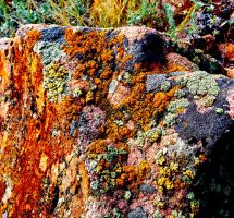 Lichens 5 saturated by marshwood