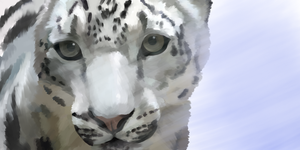 Snow Leopard Wallpaper by ChishioKarasu