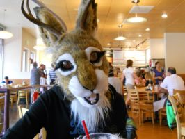 Heather the Jackalope (outside RMFC) by TwistedTerrace