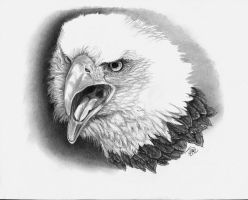 the american bald eagle by winstonscreator