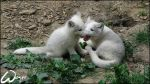 Baby polar foxes by woxys