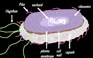 salmonella cell by Animallover08