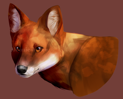 dhole by donnie-barko