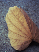 Leaves 7 by Humble-Novice