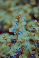 May_2014_25 by Abirvalg1989