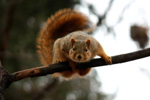 Squirrel Wants to Say Hello! by AndehDulac