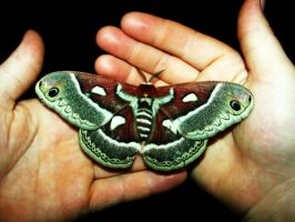 Giant Moth by MTJforever