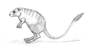 Meerkat Rat The first drawing scanning by Dragontunders