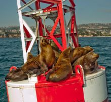 Sea lion jurisdiction by alexiuss
