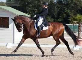 National Dressage and Jumping_126 by CalyHoney