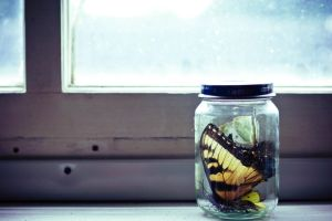 the butterfly jar. by lostinthisphotograph