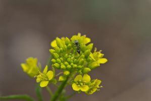 The Ant and the Flower by OneLittlePixel