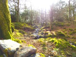 The Forest at Ashness Bridge by NotSmall