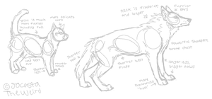 The difference between wolf and cat anatomy by JocastaTheWeird