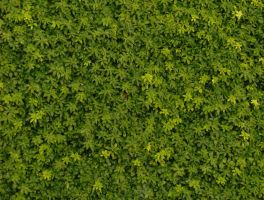 Repeating groundcover by hydestock