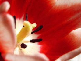 Tulip IV by punksafetypin