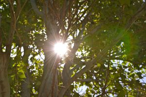 Sun Through Trees 2 by wolfgal04