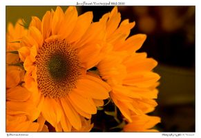 Sunflower Uncropped 8865 2010 by yellowcaseartist