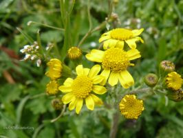 yellow spring by andi40