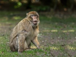 Monkey Snock 01 by NellyGraceNG