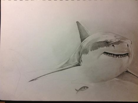 Shark WIP by Braypaige