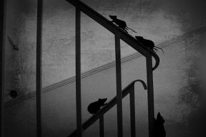 tiptoe through the stairs by lilkimfan