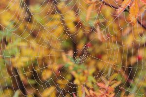 Last Web of Autumn by Arctictouch