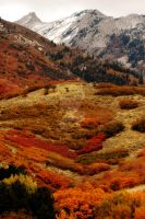 Fall Colors in Fort Canyon, UT by houstonryan