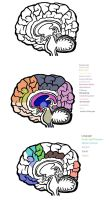 Brain Diagrams by BuddhatheBob