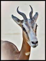 Zoo 064 by Placi1