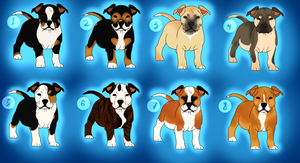 American Staffordshire Terrier Pups - CLOSED by ForgottenAmnesty