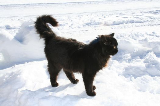 black cat on white snow by two-ladies-stocks